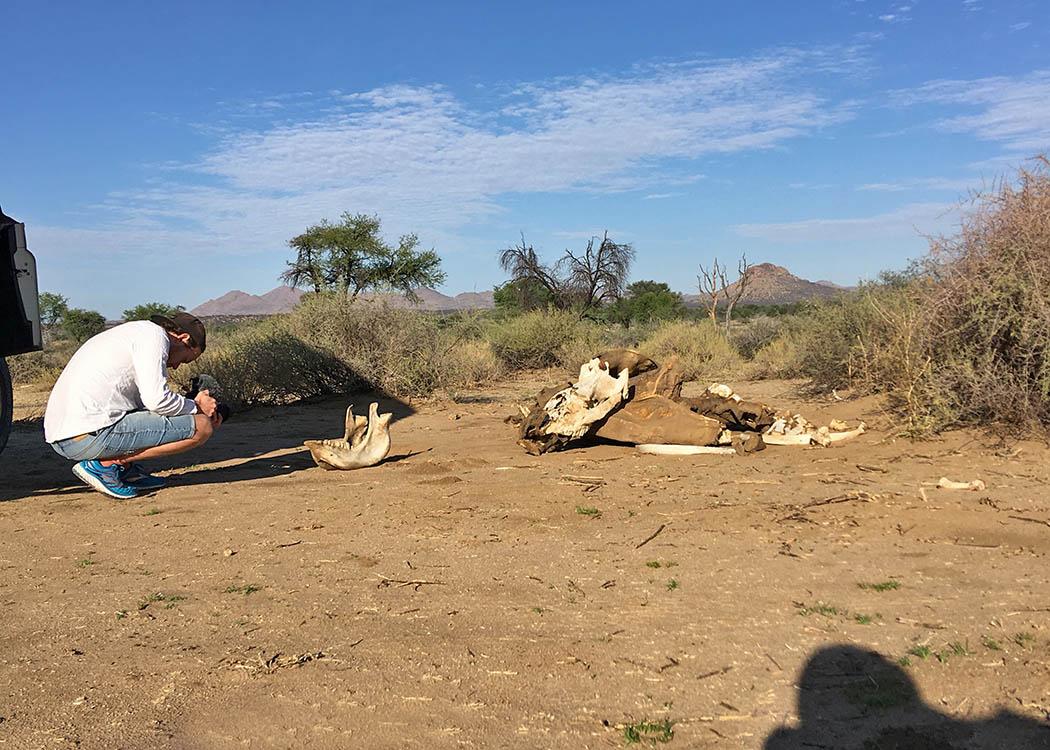 Bei den Dreharbeiten einer Doku zum Thema Nashorn-Handel in Namibia